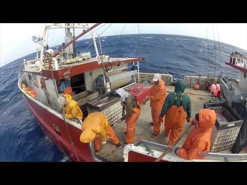 wild-caught-(2012-sword-fishing-documentary)