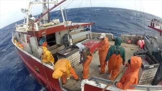 Wild Caught (swordfish documentary 2012)