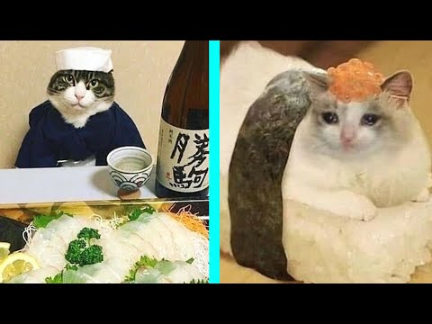 BEST CAT MEMES COMPILATION OF 2020 PART 15 (FUNNY CATS)