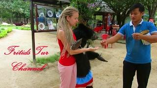 A #tame #bear, often called a dancing bear, is a wild bear captured...
