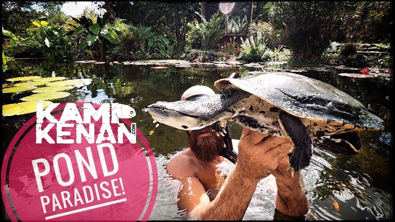 Sideneck Turtles Takeover my Backyard Pond!
