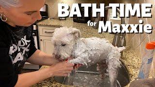 KITCHEN SINK BATH FOR MAXXIE ~ HOW I KEEP MY WHITE DOG WHITE