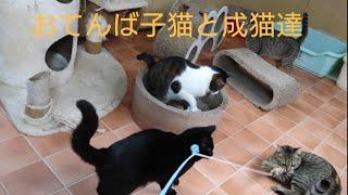【ホヌの部屋】保護猫たちと遊んでみた♪LYSTAシェルター