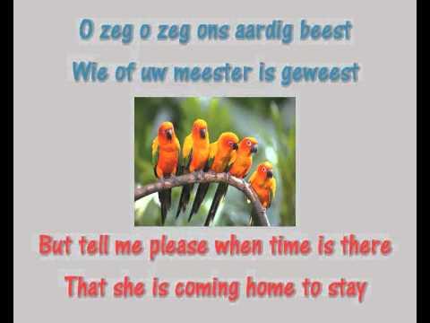 Karaoke Andy Tielman - Little Bird (Klein vogelijn) (Paak)