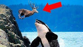 Невероятные Морские Животные, Которые Едят Сухопутных Животных