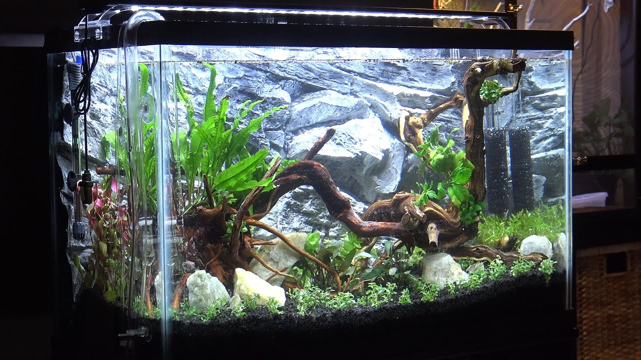 29 Gallon Freshwater Planted Aquarium Aquascaping & Setup ...