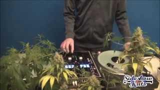 Nobodi da Vinylist. Alle Joints qualmen - Sideshow Kuts TV