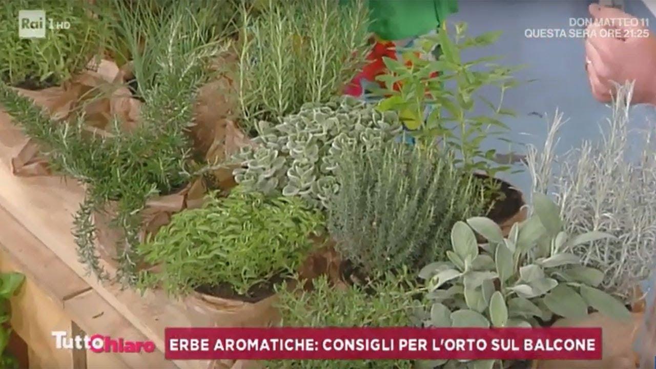 Coltivare In Casa Piante Aromatiche erbe aromatiche: consigli per l'orto sul balcone -tuttochiaro 08/08/2019