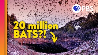Visiting the Largest Bat Colony on Earth!