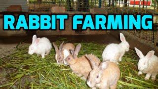 Intensive Rabbit Farming - Paadi Pantalu