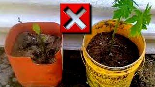 3 erros ao plantar que você pode evitar