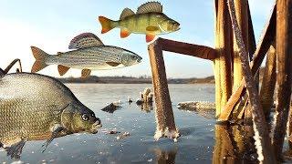 Как ловить леща хариуса и окуня зимой Секреты которых вы не знали на зимней рыбалке