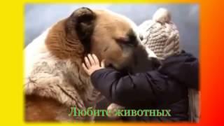 Прикольные животные Позитив для детей и не только Создай себе хорошее настроение