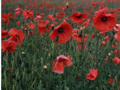 In Flanders Fields by John McCrae (read by Tom O'Bedlam)