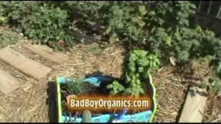 Badboyorganics Backyard Garden Series Intro.....