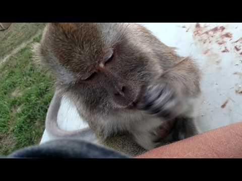 Slow Motion Monkey Slaps