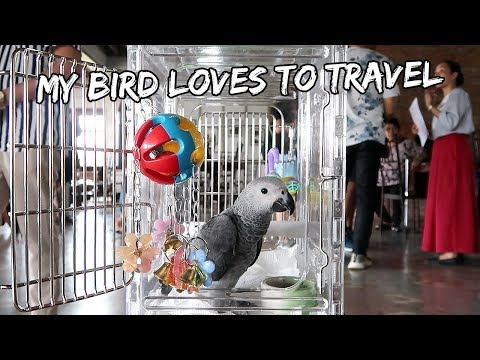 My Bird Loves To Travel | Vlog #253