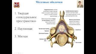 Лекция № 10. Периферическая нервная система. Лекция по гистологии.