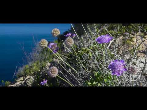 Ibiza's beautiful coast line