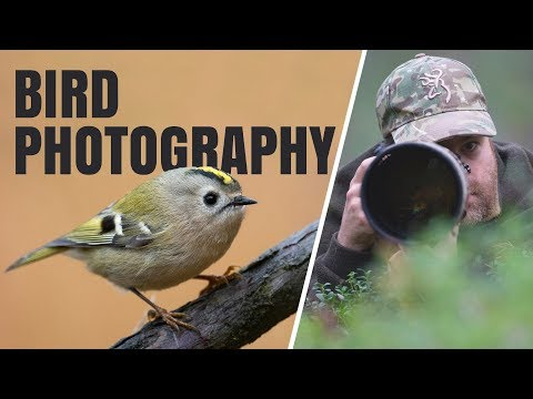 I ACTUALLY GOT IT! | Bird photography - Photographing goldcrest