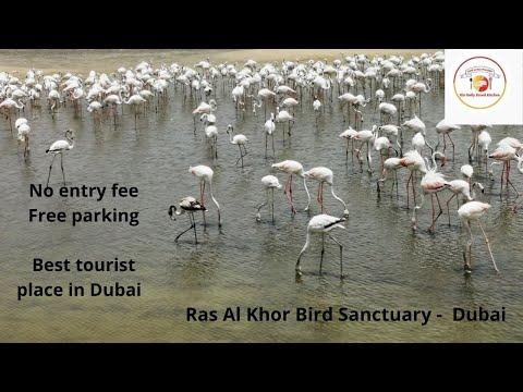 No entry fee to visit Ras al Khor Wildlife Sanctuary l  House of flamingos l Tourist place in Dubai