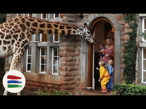 BREAKFAST with GIRAFFES!! and ELEPHANTS!! /// WEEK 118 : Ken