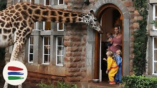 BREAKFAST with GIRAFFES!! and ELEPHANTS!! /// WEEK 118 : Kenya