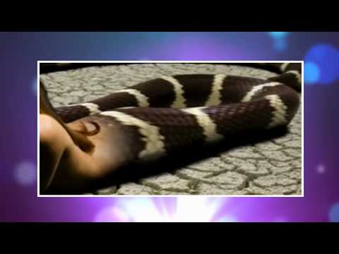 आधी लड़की आधी नागिन - HALF GIRL HALF SNAKE IN THAILAND! WHAT IS THE TRUTH?