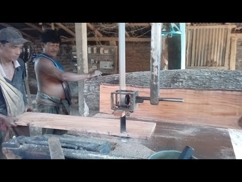Red Quality Mango Tree Cutting In Rural Village of Bangladesh Saw Mill/ Traditional Saw Mill of Asia