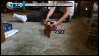 Eye Pet on Playstation 3 Exclusive Hands-On Footage - PushSquare.com