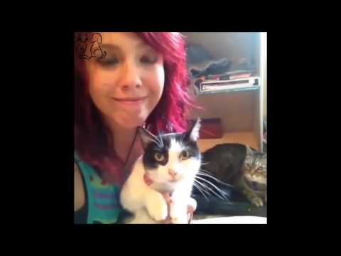 Cute Cat – Cat Compilation – Cat Vines – Vol. 2
