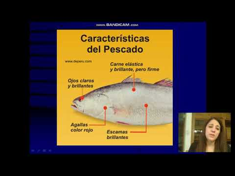 Palometa from YouTube · Duration:  5 minutes 47 seconds