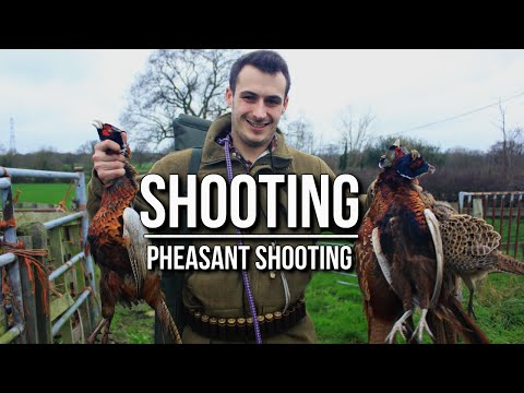 Bird Hunting - Shooting Pheasants | TA Outdoors