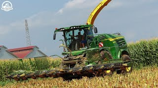 Mais Silage | JOHN DEERE 8800i + KRONE EASY COLLECT 12 Rows | JD Tractors | MASON SNC | ᴴᴰ