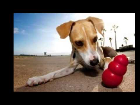indestructible-dog-toys-for-aggressive-chewers