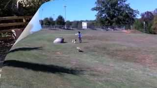 Sit Up N Listen Frisbee Dog Training At The Park Off Leash