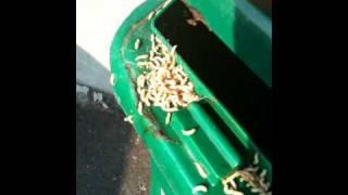 Composting In Ottawa