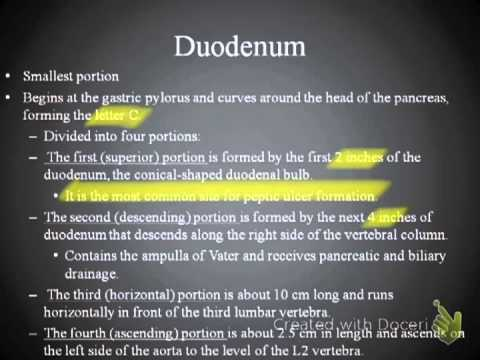 Lecture 2 (The Abdomen).mp4
