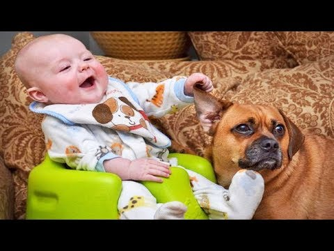 LAUGH or GRIN Baby and Dog ★ Funny Viral Compilation