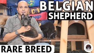 Belgian Shepherd Puppies  All About Rare Dog Breed | Funny & Cute Puppies Video | Baadal Bhandaari