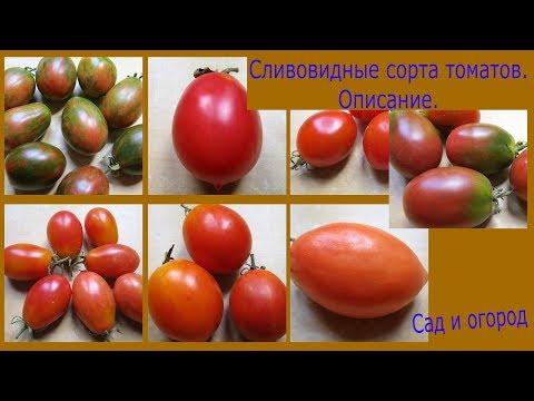 Сливовидные сорта томатов.Описание. Сад и огород выпуск 190   урожайный   урожайные   помидоры   томатов   теплица   рассада   томаты   ранние   огород   лучшие
