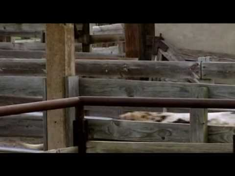 The American West 06 - The Cattle Trail (1879) - from Timelines.tv