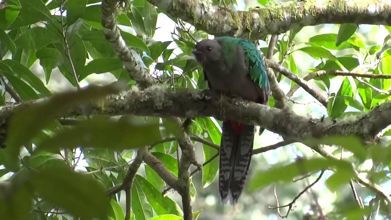 Birding Pablo Bedrossian