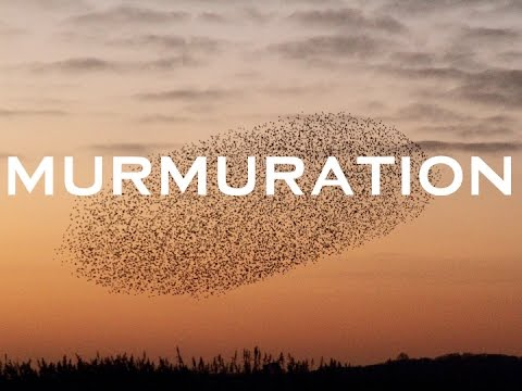 Amazing murmuration of starlings in the North York Moors National Park