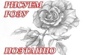 КАК НАРИСОВАТЬ РОЗУ ПОЭТАПНО (ВИДЕО)(Сегодняшний урок я решила посвятить рисованию розы со штриховкой. Из этого видео вы узнаете как нарисовать..., 2015-12-09T12:30:29.000Z)