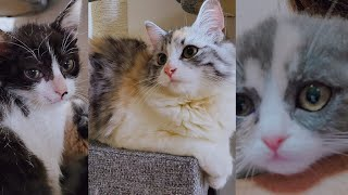 All about our Cats SCOTTISH FOLD/TURKISH ANGORA/STRAY CAT