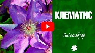 видео Азалия » Садоводу, дачнику, огороднику.