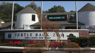 School Trip: Turtle Back Zoo Part 1