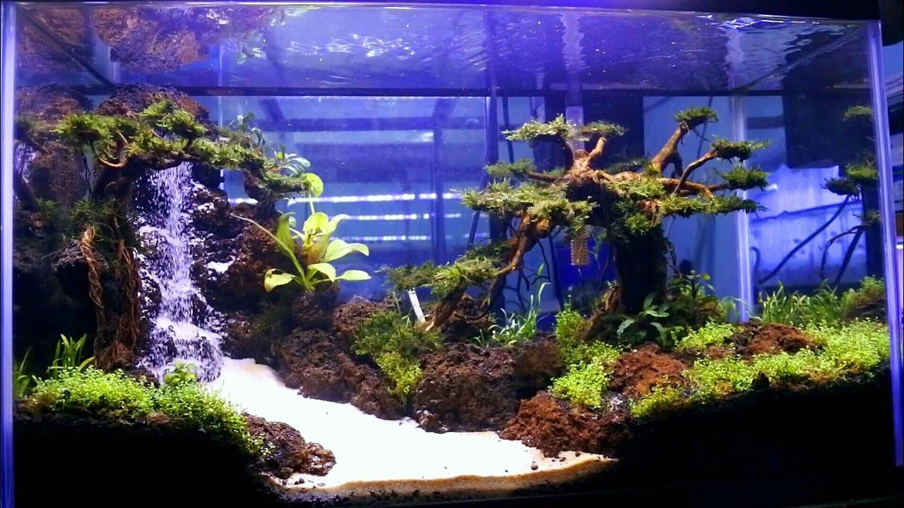 Aquascape Air Terjun Pohon Bonsai Aquarium Jernih Koleksi Aquascape Sumenep Youtube