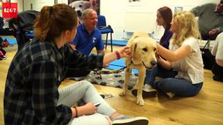 Unique Puppy Room Helps Bristol University Students Cope With Exam Stress